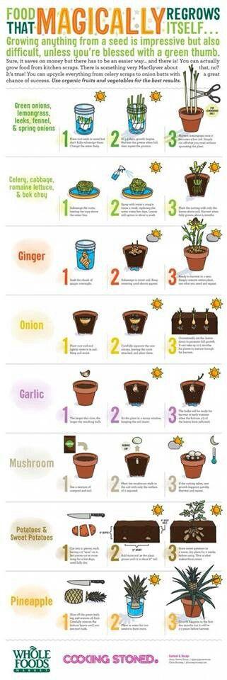 Jardiner avec restes de cuisine.