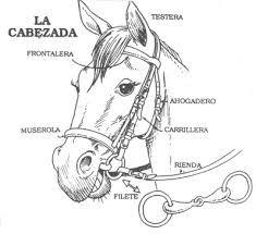 Resultado de imagen para riendas para caballos