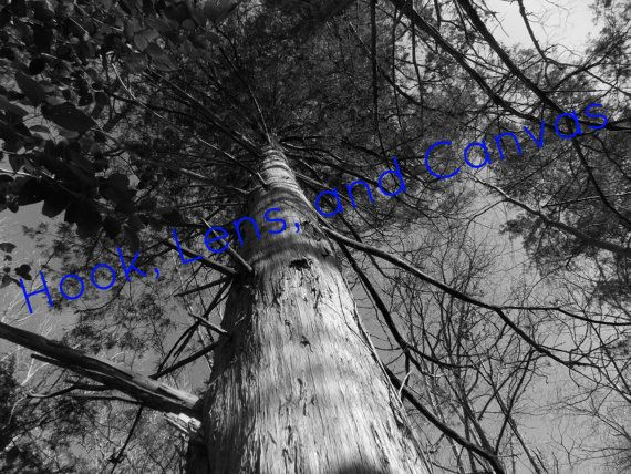 Digital Photo: Timber by HookLensAndCanvas on Etsy