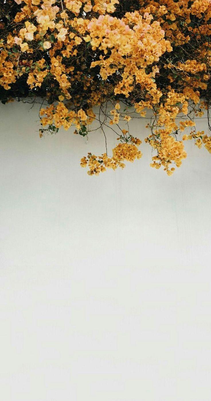 Wall Flowers Love Geel Behang Achtergronden Bloem Behang