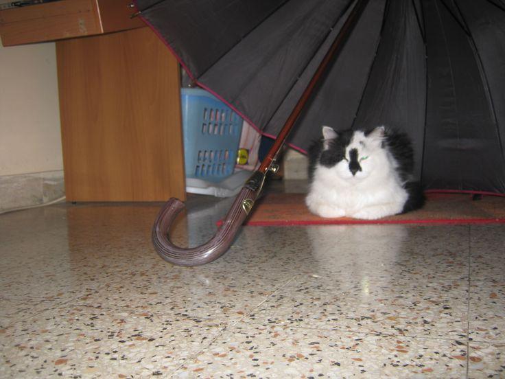se piove sono pronto
