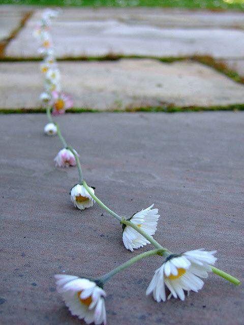 Daisy chains. Op een mooie lente- of zomerdag lekker in het gras zitten, armbandjes en kettinkjes maken van madeliefjes.