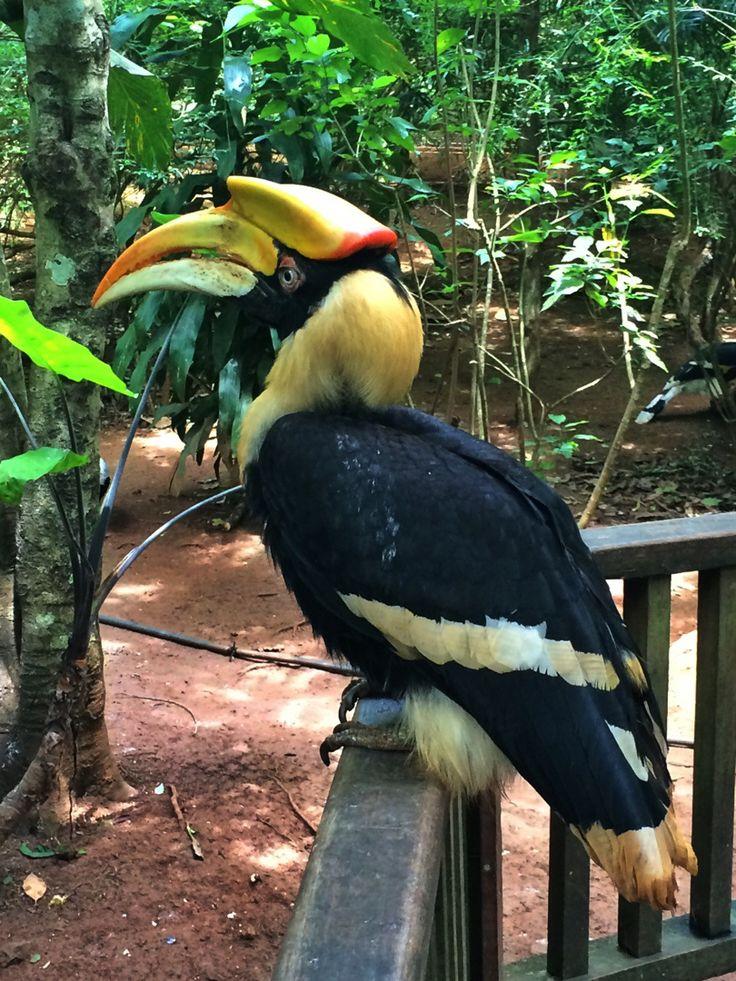 pyin oo lwin botanical gardens aviary. Myanmar, Burma backpacking SE Asia. Travel