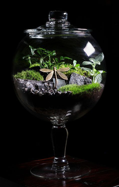 Custom terrarium with dragonfly