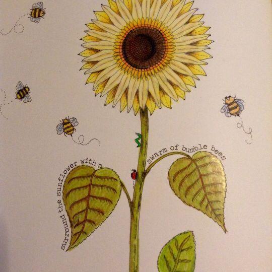 Sunflower Secret Garden Girassol Jardim Secreto Johanna Basford Adult ColoringColoring BooksColouringSecret