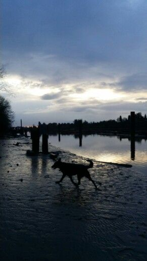 Dave the dog, running, river shore, sky