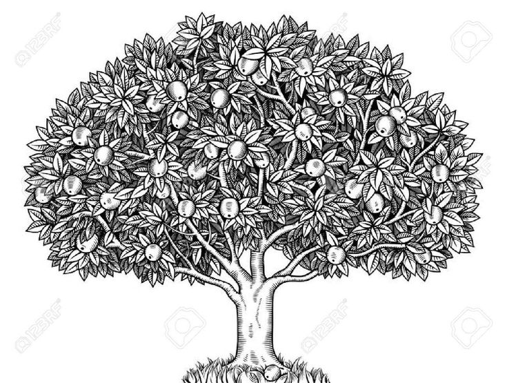 Engraved apple tree full of ripe apples , #Affilia…
