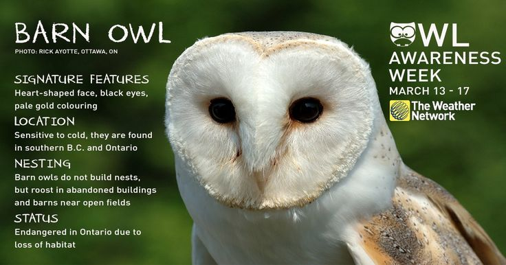 #owlawarenessweek weather network - Twitter Search
