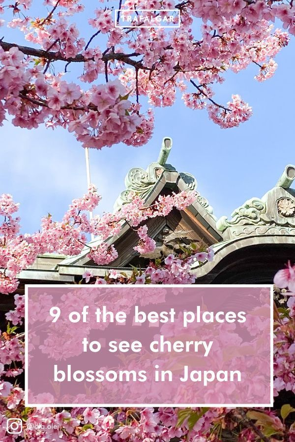 9 Of The Best Places To See Cherry Blossoms In Japan In 2021 Cherry Blossom Japan Japan Travel Destinations Asia