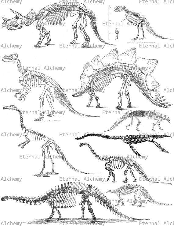 Dinosaur Skeleton Collage Sheet  Vintage Digital by eternalalchemy, $1.00