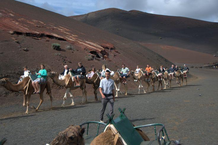 Lanzarote a caballo - Buscar con Google