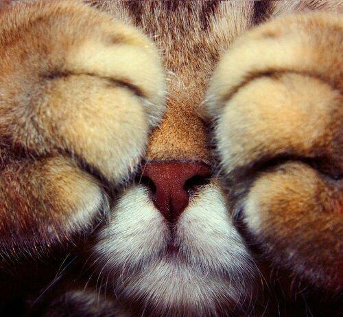Animales, gato, tierno, garras, dulce, amor