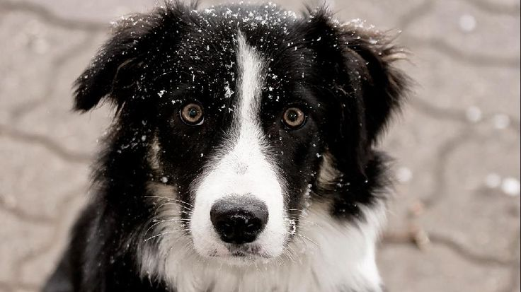 Dog in Snow to Melt Your Heart