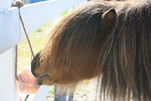 """Equine diet and nutrition - the """"natural"""" way"""