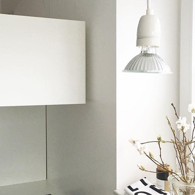 ber ideen zu magnolien auf pinterest. Black Bedroom Furniture Sets. Home Design Ideas