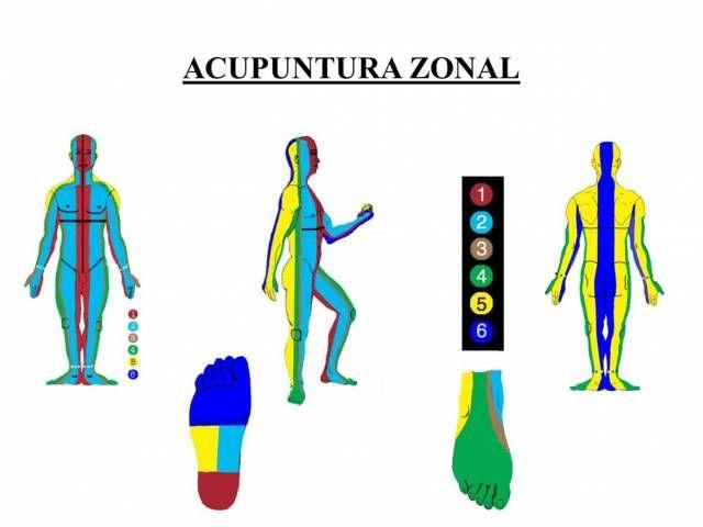 Curso de acupuntura zonal y examen profesional de ex-alumnos | 213
