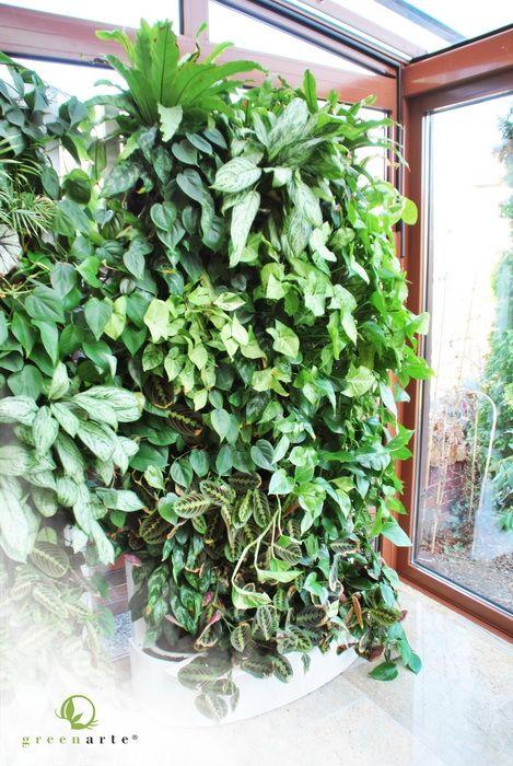 Modułowe zielone ściany w Rybniku - wizyta po okresie półtora roku - kwiecień 2013
