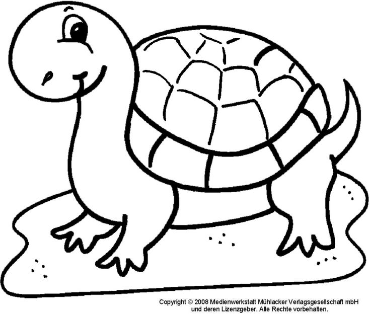 ausmalbilder schildkröte Ausmalbilder für kinder