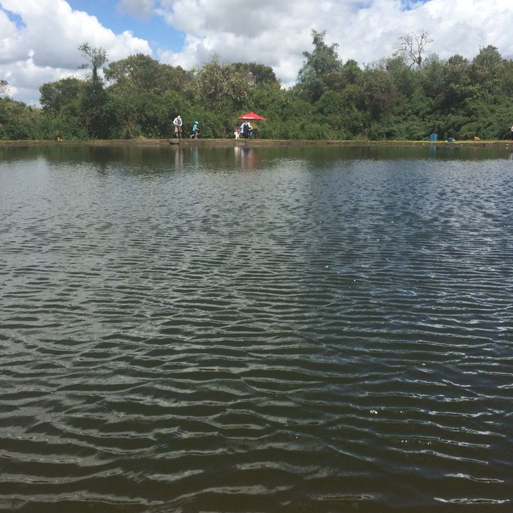 Pesca trucha lago