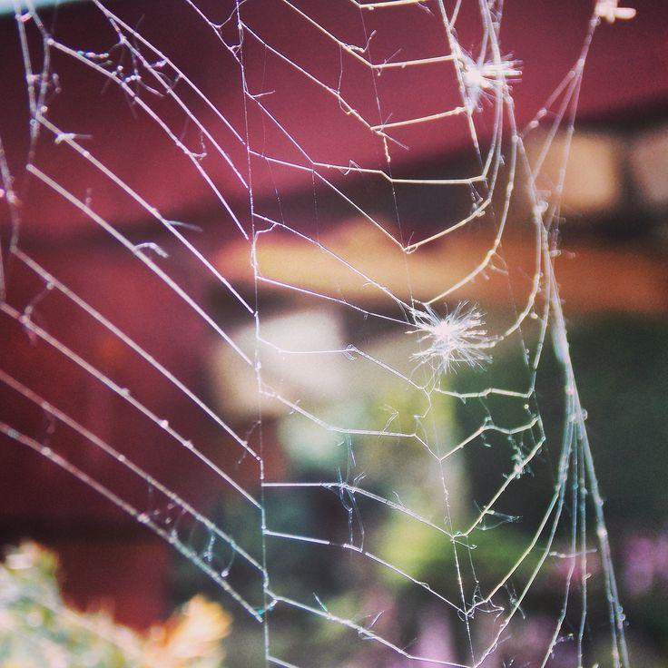 Spider. Web.
