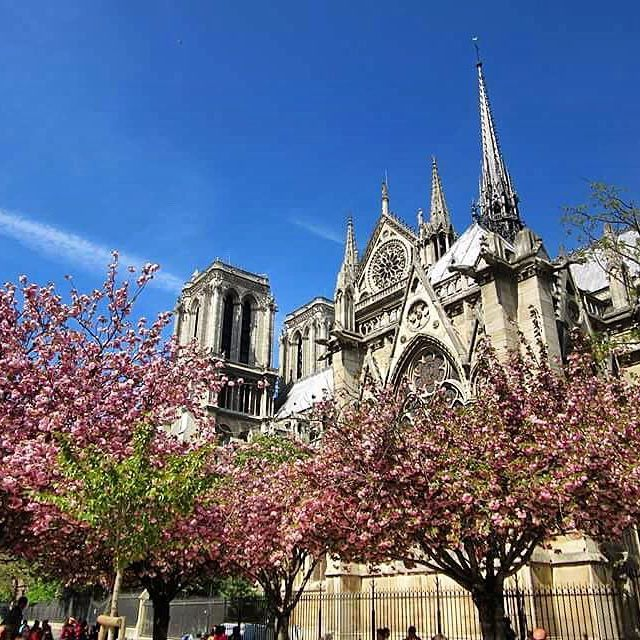 🇫🇷Notre Dame during the month of April 🌸🌺 #spring #cherryblossoms