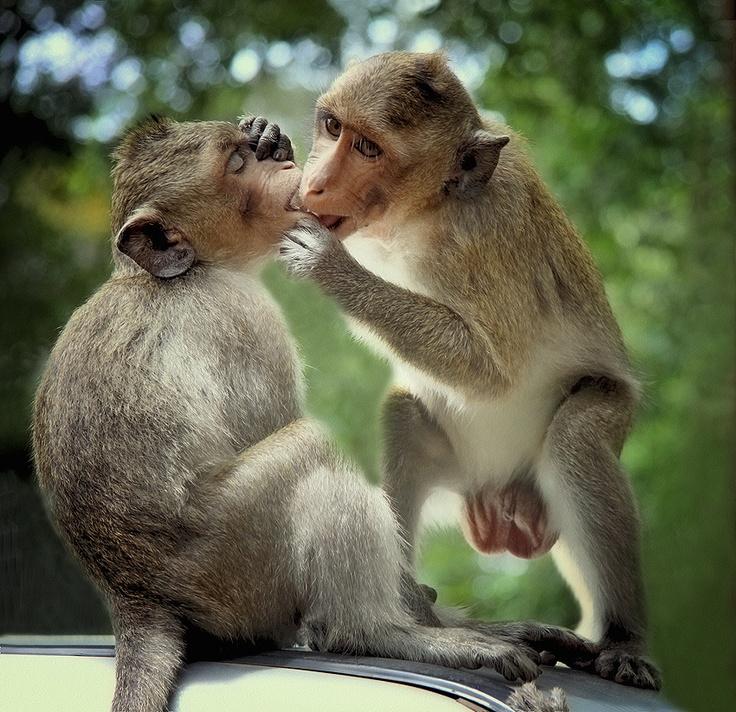 фасон перешел веселые картинки с поцелуями элементы