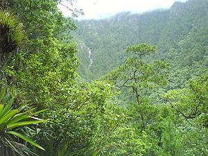 Bosque montañoso