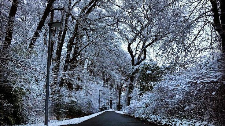 Drenthe ligt vandaag onder een witte deken. Behalve problemen op de weg en op het spoor, levert het ook mooie plaatjes op.