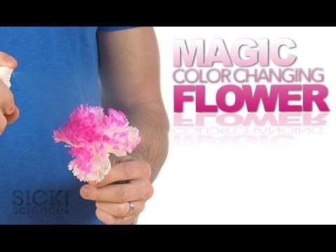 Magic Color Changing Flower - Sick Science! - YouTube / #Magicflix #YouTube #Movie #Video #Kids #Toddlers #Science #Fun #Project