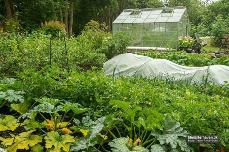 Varme giver gode afgrøder