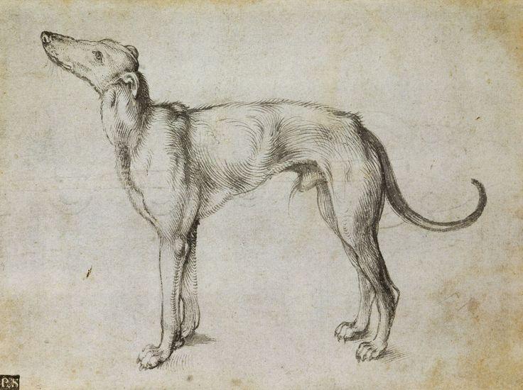 A greyhound | Albrecht Durer - Royal Collection Trust