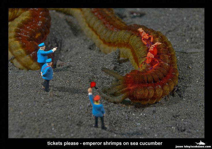 Ξωτικό: Υποβρύχιες φωτογραφίες με μινιατούρες από τον Jason Isley