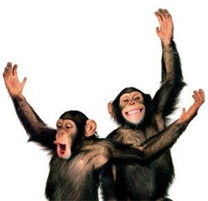 Chimps my favorite animal!!: