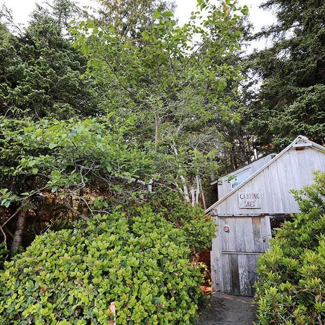 Contest Checkpoint: The Carving Shed on North #ChestermanBeach! Tucked away…