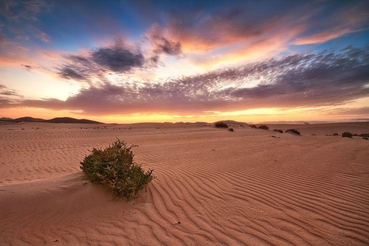 """El Parque Natural de las Dunas de Corralejo en Fuerteventura (Canarias) cuenta con más de 2.600 hectáreas. Las Dunas de Corralejo están situadas al norte , en el municipio de la Oliva en el norte de la isla. Son uno de los principal atractivo turístico de la isla, después de sus playas de arena blanca. Son las dunas más grandes del archipielago Canario. La playa donde se dan las dunas, es conocida como el """"caribe canario"""" y desde ellas se contemplan bonitos atardeceres.  Foto de CARLOSCUK"""