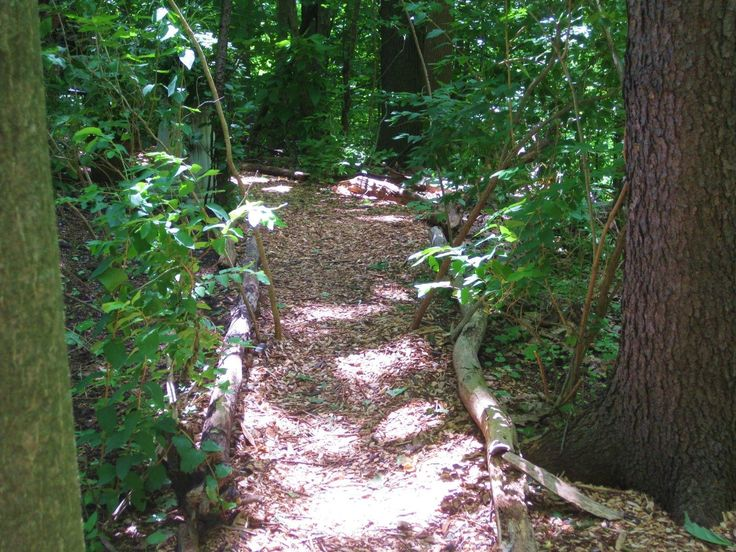 about woodland garden on pinterest forest garden wooded backyard