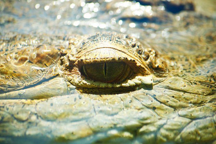 No creerás que tan poderosa es la mordida de estos animales - #animales, #Vida  http://www.vivavive.com/no-creeras-que-tan-poderosa-es-la-mordida-de-estos-animales/