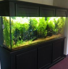 CO2 Basics for the Freshwater PlantedAquarium - Fish   Pet Care Corner by PetSolutions - PetSolutions Blog