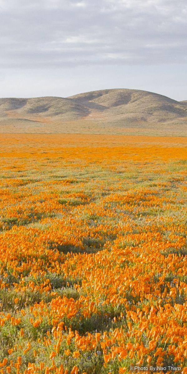 カリフォルニア州 アンテロープバレー(Antelope Valley, located Los Angeles County, California)
