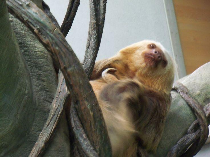 Chloe scratching.