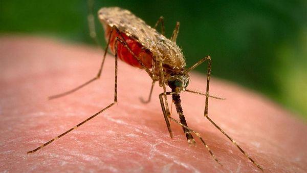 Podle vědců je virová epidemie Ziky způsobena pesticidy, které následně nesou vinu za vrozené vady místních obyvatel jižní Ameriky, a to především Brazílie. Tato zpráva šokovala svět již před třemi lety. Přesto se o ní však dodnes v globálu neví, nicméně mnoho osob bylo varováno chemickou látkou, která má primárně za úkol, ulehčit náš život …