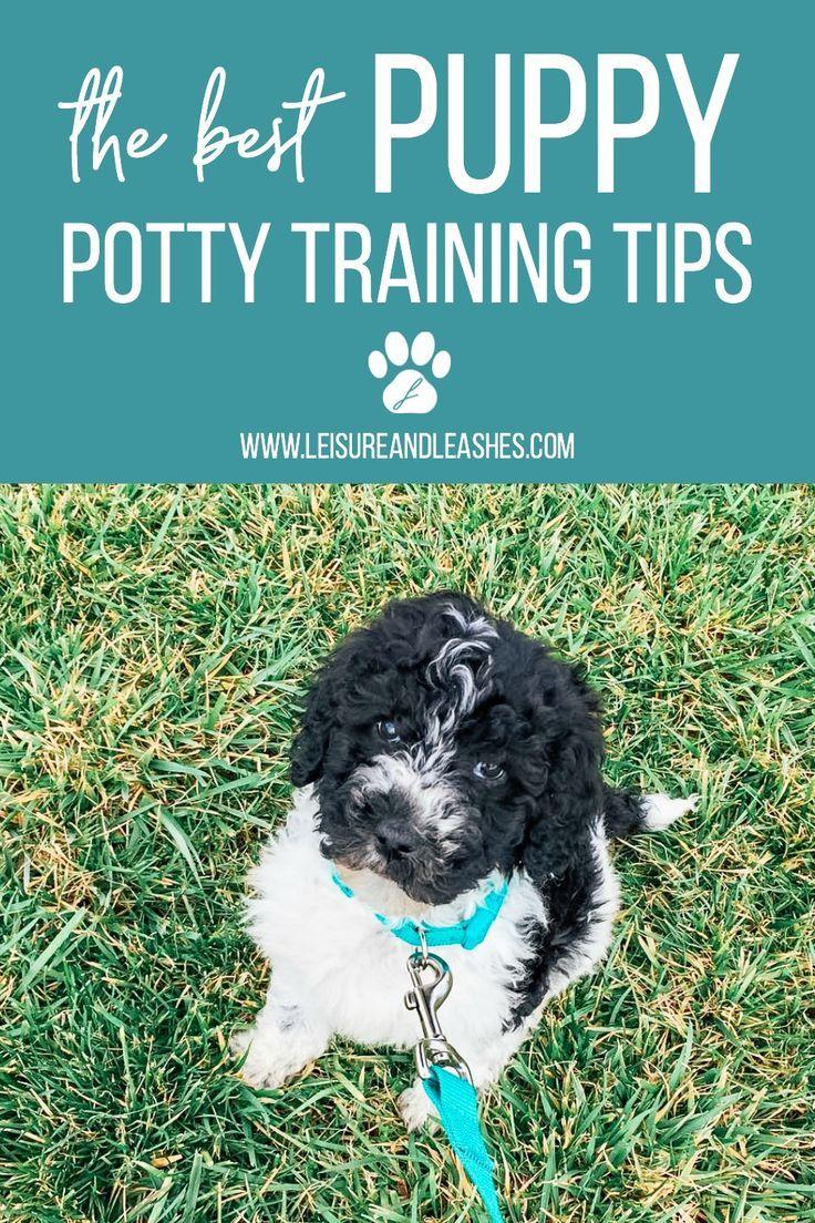 Best Puppy Potty Training Tips Potty Training Puppy Puppy Potty Training Tips Potty Training Tips