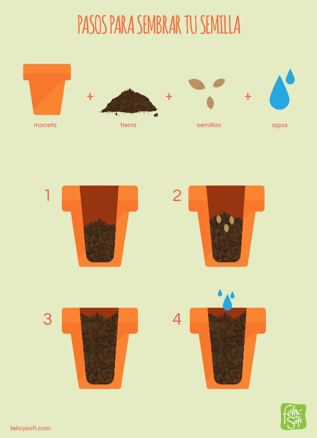Pasos para sembrar tu semilla. Sofi siembra plantas comestibles.
