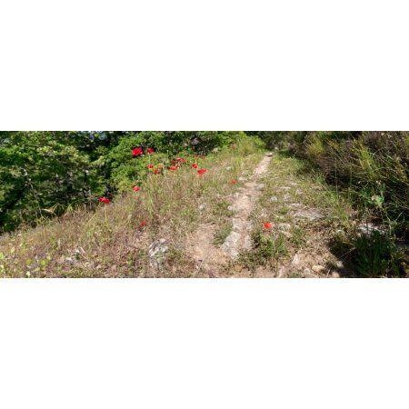 Poppies on the way to Caseneuve Saint-Martin-de-Castillon Vaucluse Luberon Provence-Alpes-Cote DAzur France Canvas Art - Panoramic Images (27 x 9)