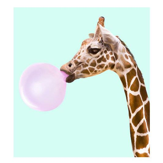 🌈Yeah! C'est le weekend! Au programme un peu de Soleil, de Douceur , et plein de Nouvelles Créations colorées ! Je vous souhaite un Bon Weekend! 📷 @paulfuentes_design ❤️👌 #weekend #happyweekend #colorfull #sun #summer #goodtimes #animal #bubble #bubblegum #funny #inspiration #paulfuentes #artwork #pop #fauve_paris