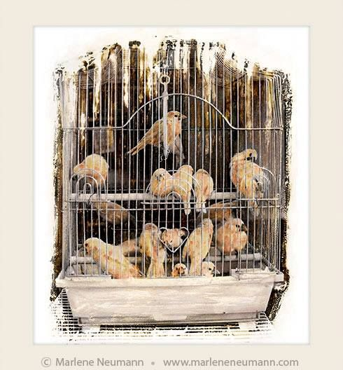 SILENT SONG...an interesting image of mine taken in Hong Kong many years ago...I could not believe how many tiny birds people kept in one small cage. In this image the bars are disappearing and soon the birds would be free. Inside each of of us is a bird that longs to be free...don't die with your song still inside of you....love Marlene www.marleneneumann.com