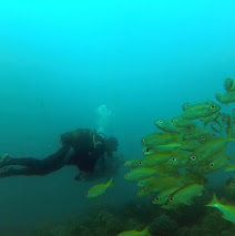 #GreenBubblesRISE per #sustanible #diving. Green Bubbles started the survey of the scuba divers in Ponta do Ouro thanks to the local operators.