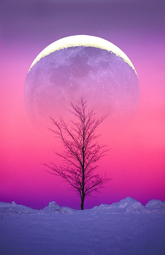 Winter Moonrise: Nature, Winter Moonrise, Beautiful Moon, Trees, Pink, Full Moon, Beauty, Photography, Moonlight