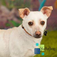 Brandon - Dachshund pet adoption in Scranton PA #dogadoption