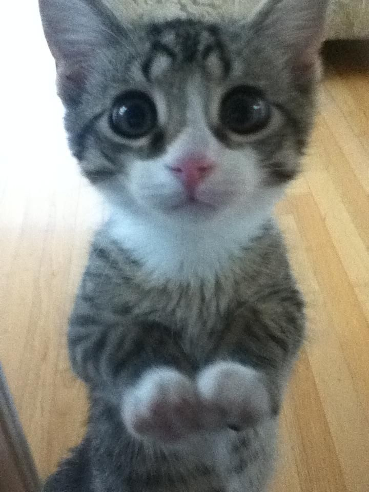 real life puss in boots. BIG eyes